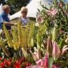 RHS Garden Wisley - 25th Anniversary Flower Show