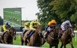 Newmarket - Gallops and Racing Yard Tour + Racing
