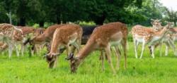 Deer Park, Snettisham